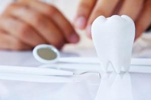 dentist holding molar,dental concept